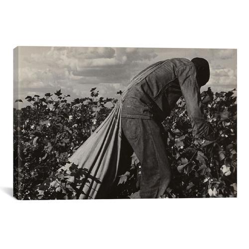 Cotton Field Stoop Laborer, San Joaquin Valley, California